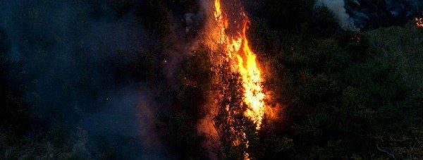 лес пожар