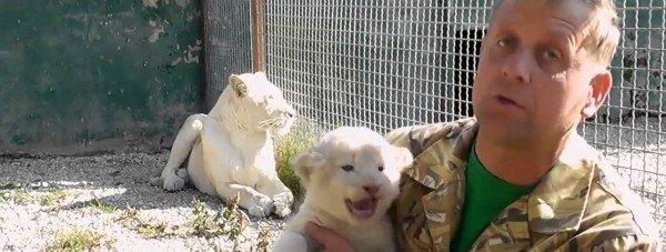 В Крымском сафари-парке родились белоснежные львята