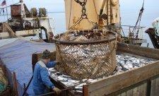 рыба судно добыча