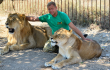 зубков и львы