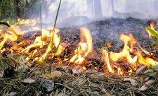пожар лес