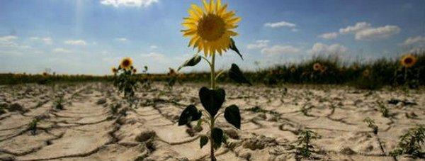 земля засуха