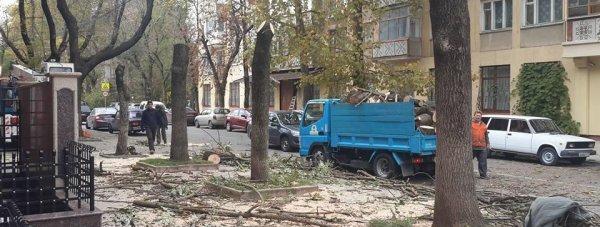 Санитарная обрезка деревьев по улице Шполянской