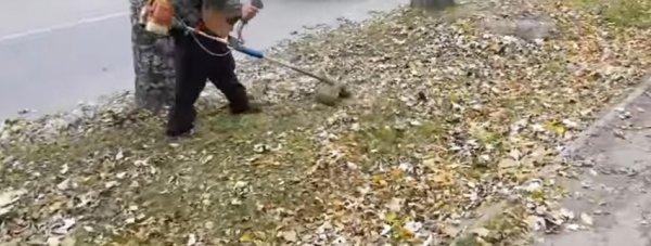 покос листвы