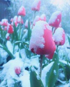снег симф2