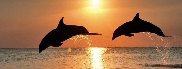 дельфин1