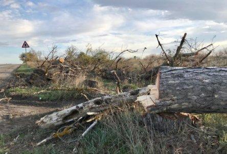 вырубка деревьев таврида