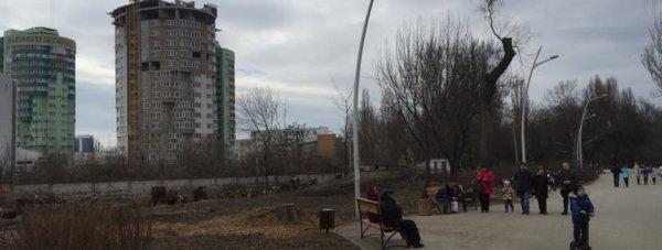 вырубка деревьев парк