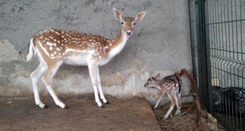 зоопарк севас