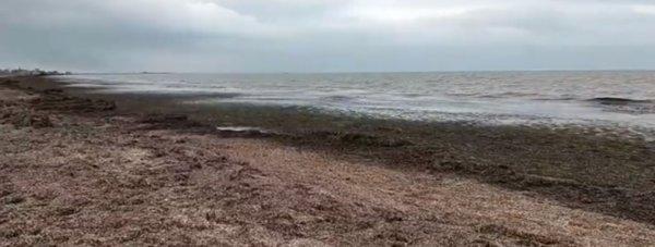 пляж болото