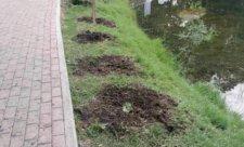 выкопали деревья