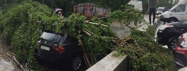 дерево упало симф
